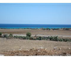 Terrain de 1000 m² près d'el haouria - Image 2
